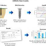 5 census flow
