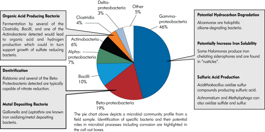 Next Generation Sequencing   Microbial Insights